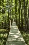 1500 ft. boardwalk to the Suwannee River