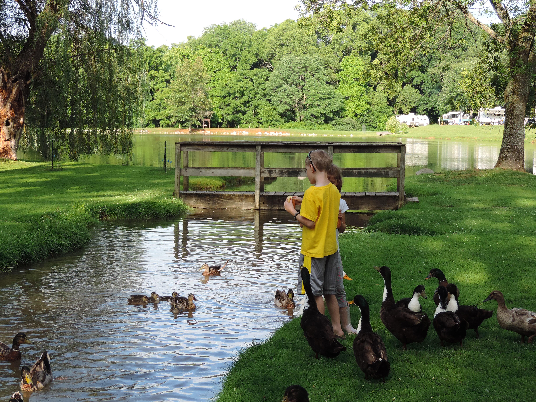 Feeding the ducks, a perennial pastime.