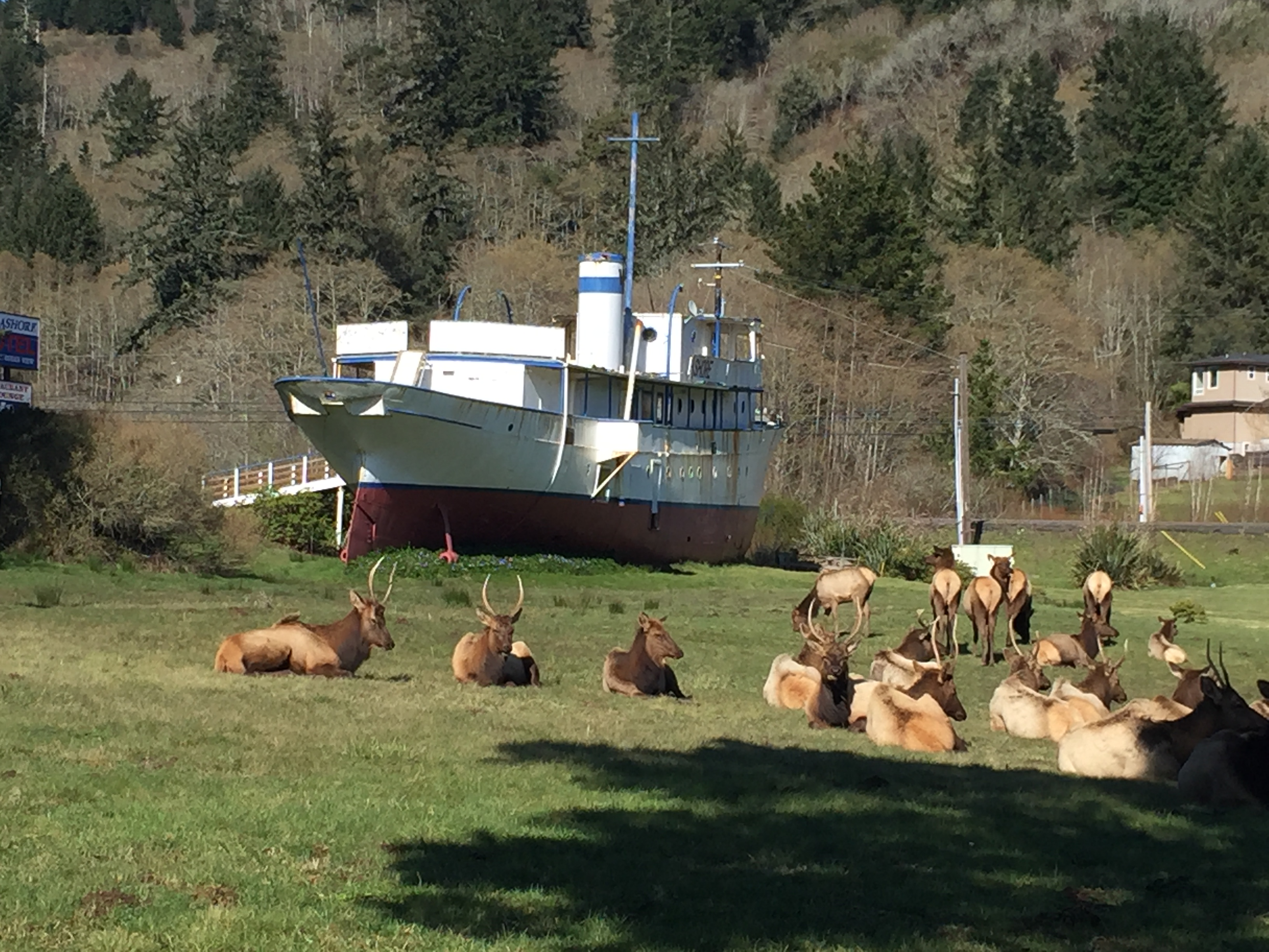 Local Wildlife in field, with a bit of history behind. Ship was built in 1925
