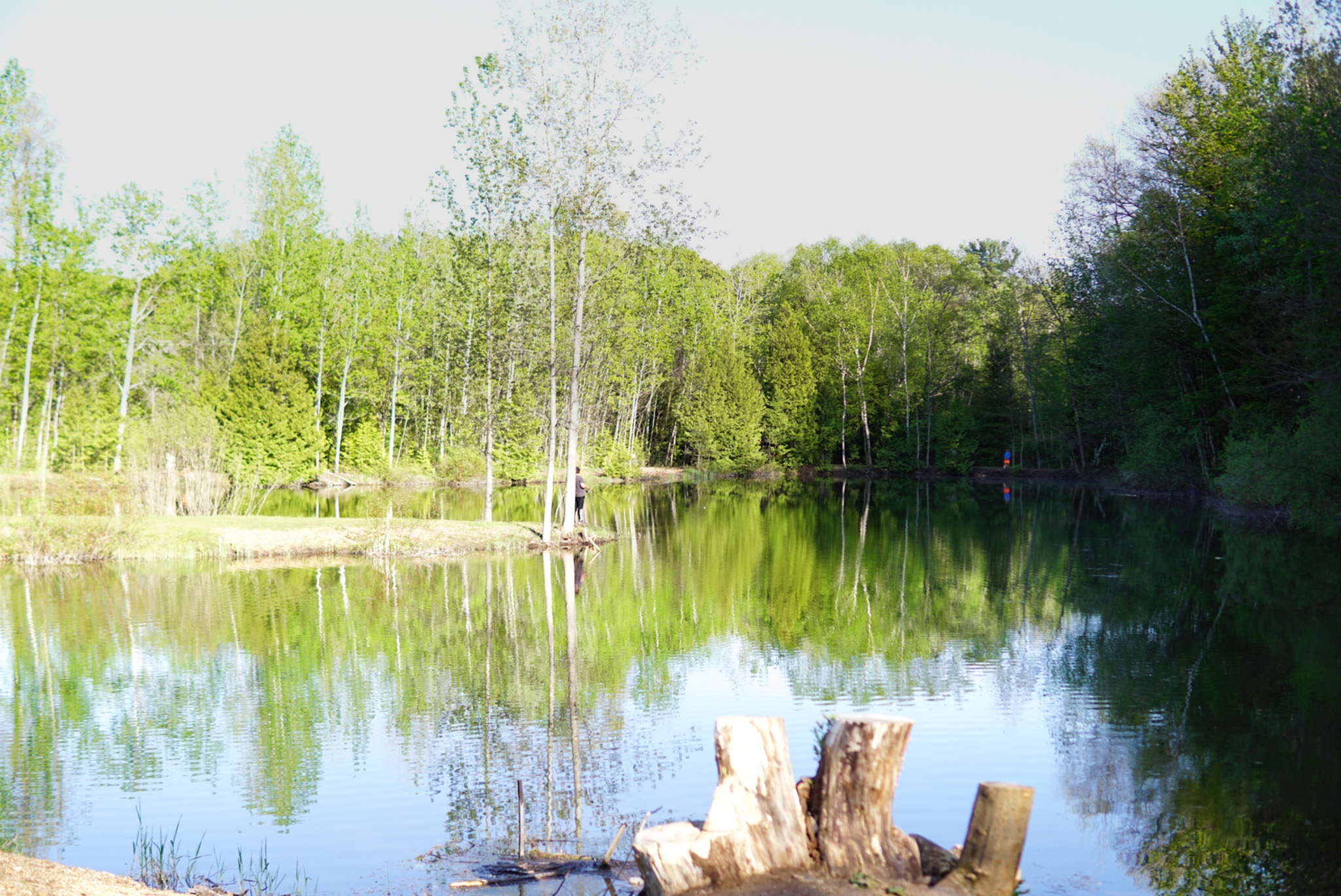 View of our ponds