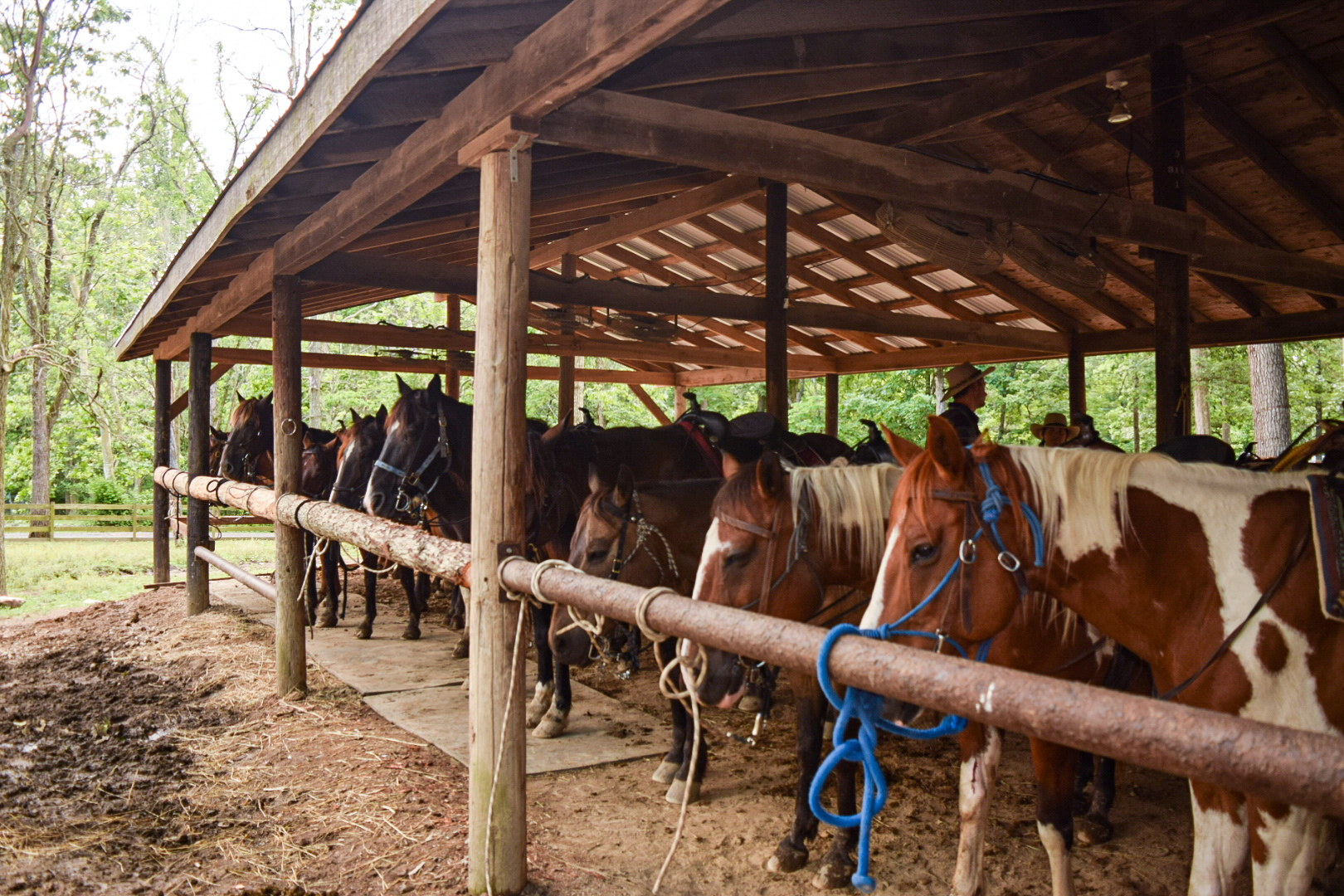 Trail horses waiting for their guests