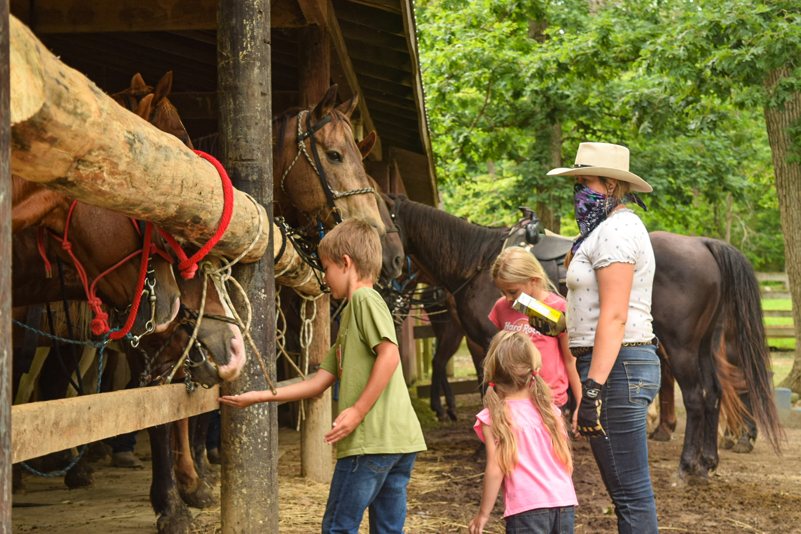 Trail ride horses, feeding treats