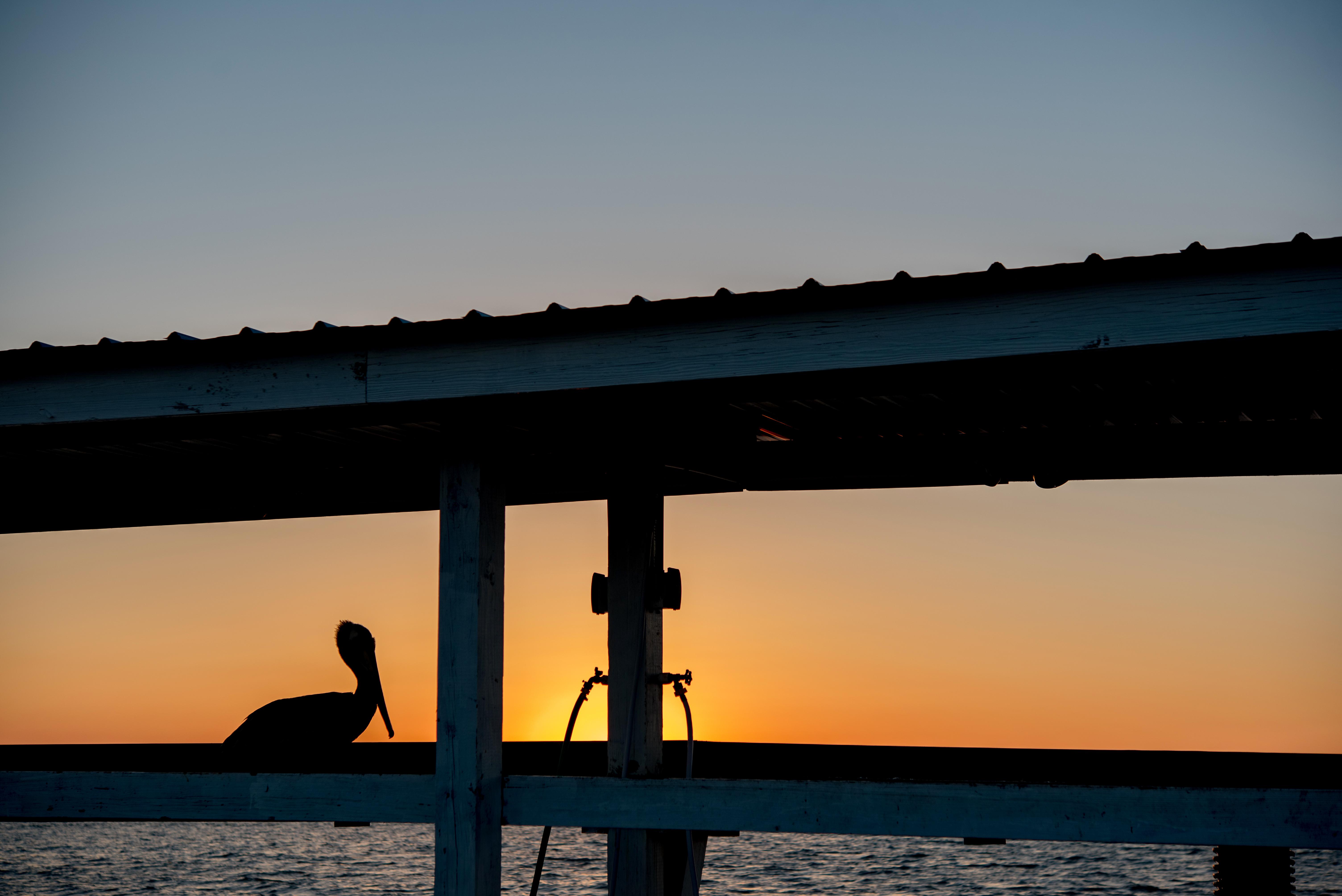 A pelican enjoying the sunset.