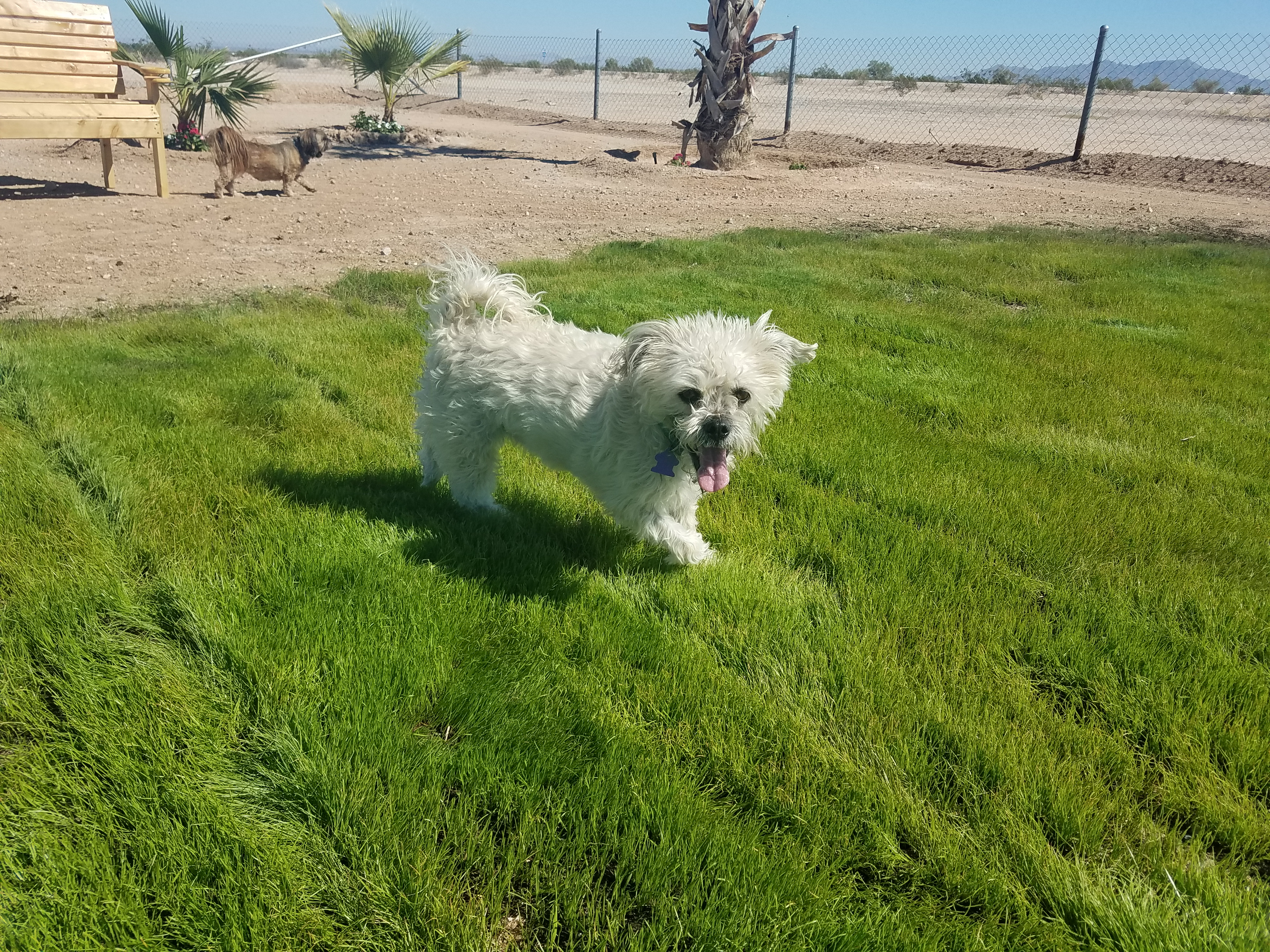 Dog park and dog run; we are pet friendly!