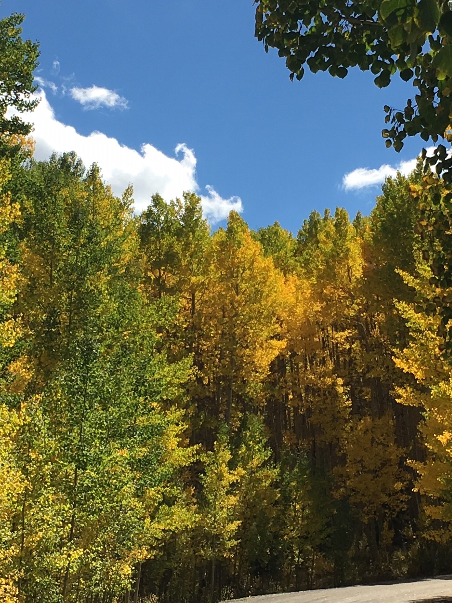 Amazing fall drives during our Fall Season!