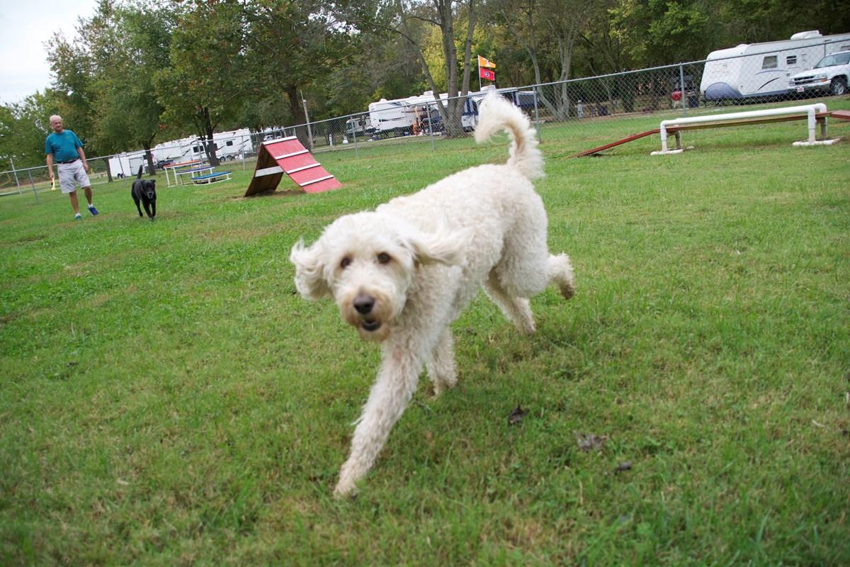 Bowling Green KOA - dog park