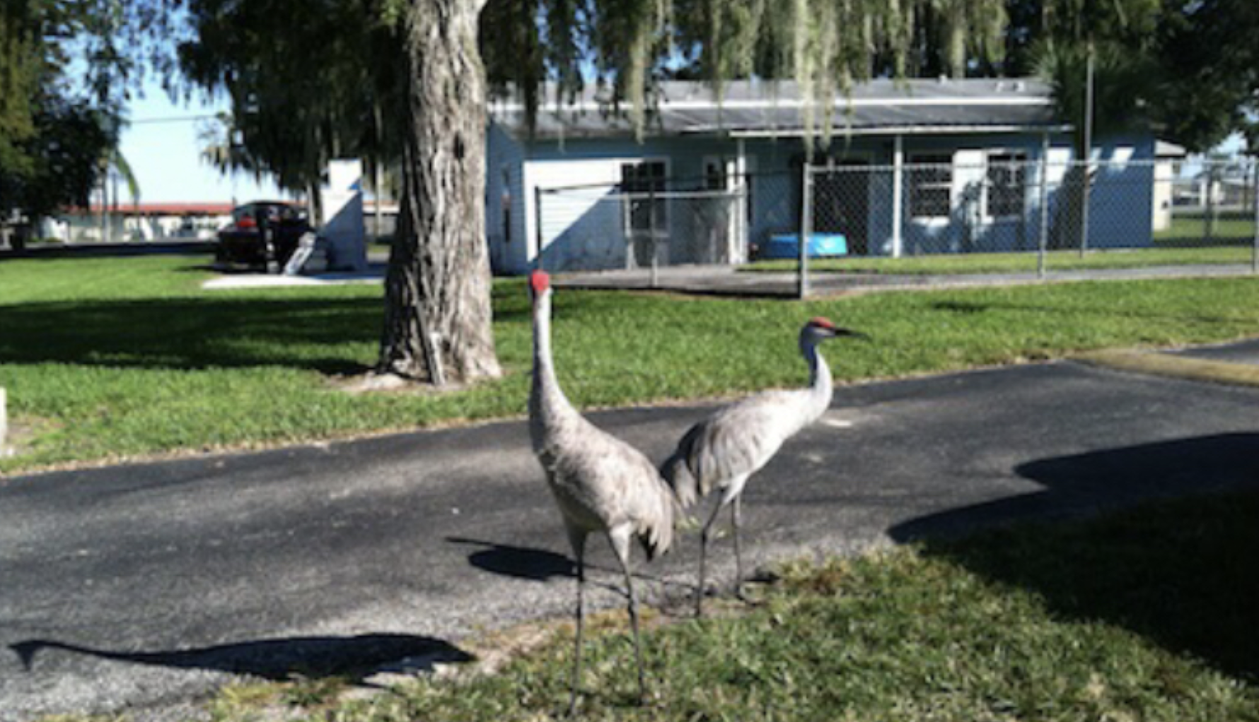 Okeechobee Lake RV Park-Wildlife