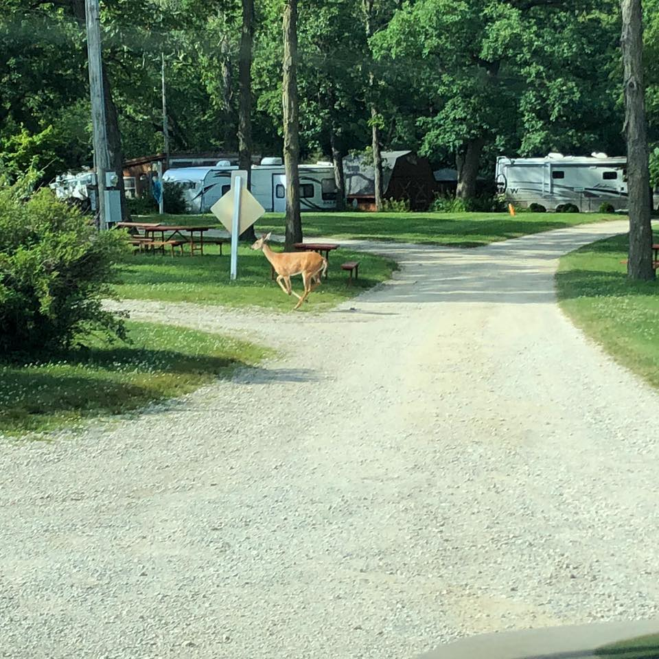 Troll Hollow Campground