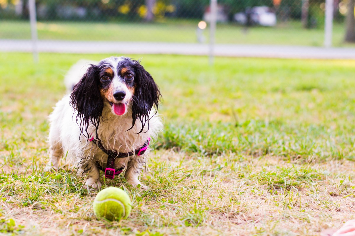 Let your pet run free in our Kamp K9 area.